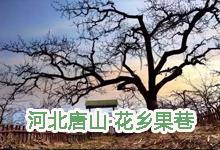 河北唐山·花乡果巷