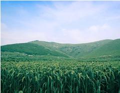 田园综合规划需要注意的问题有哪些?